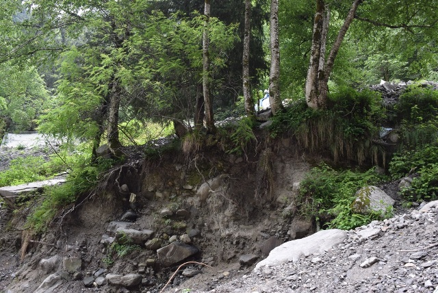 Trees cling to eroding life