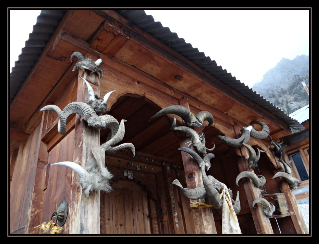 Trophy horns nailed at Rakchham Temple, Kinnaur (Photo Courtesy - Geeta)