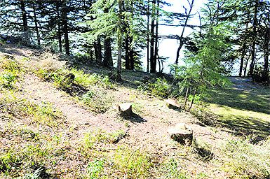 Himachal Police quiz Chandigarh Hotel Owner in Illegal Tree Felling Case